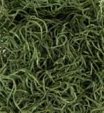 Imitation Moss