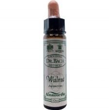 Ainsworths Walnut   10 ml