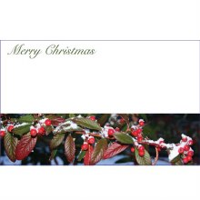 Merry Christmas Red berries w/