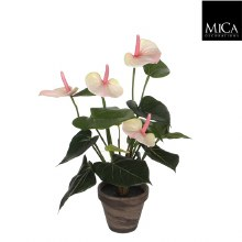 Anthurium in pot (40cm/Light Pink)