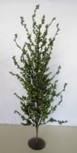 Berry Tree Green 80cm