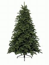 Noble pine 180cm
