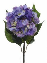 Single Hydrangea Blue