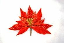 9in Poinsettia Clip Red w Gold