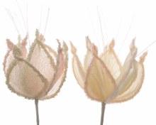 organza flower pearl
