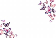 Card Butterflies On White