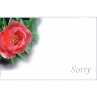 Cards Pink Paeony Sorry