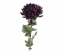 Silk chrysanthemum (Velvet Purple)