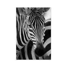 plastic banner zebra