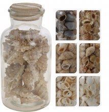 DECO SHELLS IN GLASS JAR