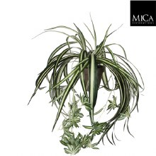 Chlorophytum green in pot Stan grey d11,5cm - l45x