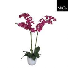 Phalaenopsis in pot Tusca white (Purple)