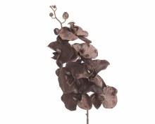 velvet orchid on stem
