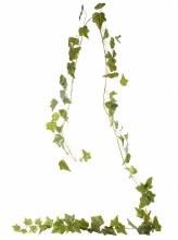 1.8m English Ivy Garland Green