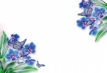 Cards Blue Orchids And Butterfly
