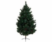 Ponderosa pine 240cm