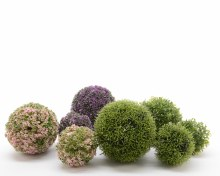 PE plant ball (5 assorted/3 colours assorted)