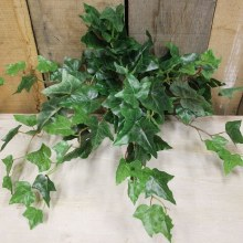 17 english ivy bush x9 w/89 lvs (6/48)