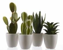 plc succulent in plc pot