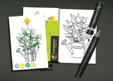 Flowers Color Cards