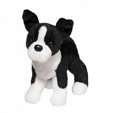 Quincy Boston Terrier