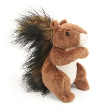 Roadie The Red Squirrel