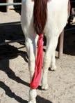 Tail Tamers Lycra Tail Bag