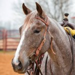 CSE Browband Headstall