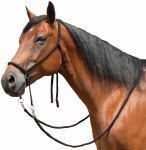 Bitless Bridle Available in Black or Brown
