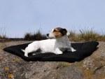 """Back on Track Dog Blanket 20"""" x 27"""""""