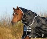 Amigo Black/Silver Stock Horse Hood