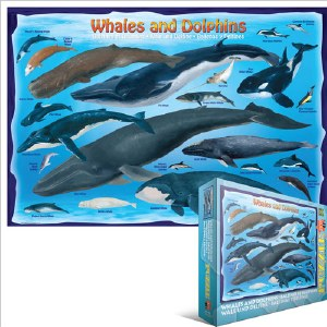 Whales and Dolphins 100-pc