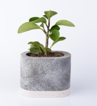 D.A.R. Projects Oval Planter - White Base