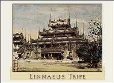 Linnaeus Tripe: Boxed Notecards