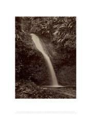 Felix Morin: Waterfall, Trinidad - 11X14