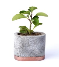 D.A.R. Proyectos Oval Planter - Copper Base