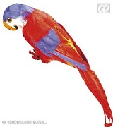 Red Feathered Parrot