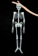 Glow In The Dark Skeleton