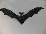 43cm Halloween Bat Prop