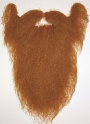 Long Ginger Beard