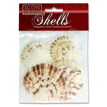 Craft Shells Scallop 7cm 5 Pack Icon