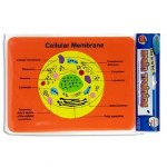 Brain Training Foam Puzzle Cellular Membrane
