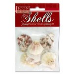 Craft Shells Scallops 5cm 10 Pack Icon