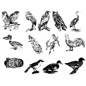 Birds Decals Black