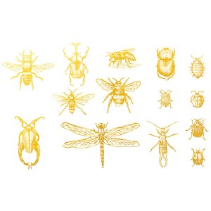 Gold Luster, Bugs 2