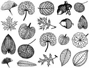 Leaves Decals Black