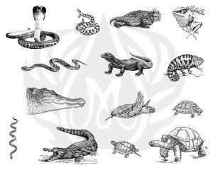 Reptiles Silk Screen
