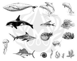Sea Life 2 Silk Screen