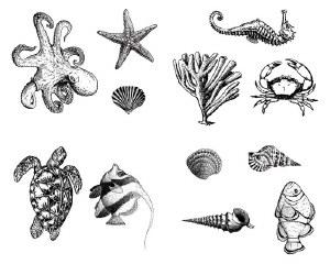 Sea Life Silk Screen