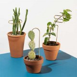 Plant Sticks set of 3